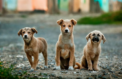 dogs-400x260