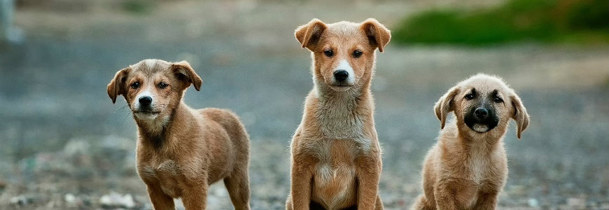 dogs-870x300